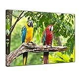 Kunstdruck - Macaw Papageien - Bild auf Leinwand - 70x50 cm einteilig - Leinwandbilder - Tierwelten - Tropen - Sittich - Bunte Vögel auf Einem AST