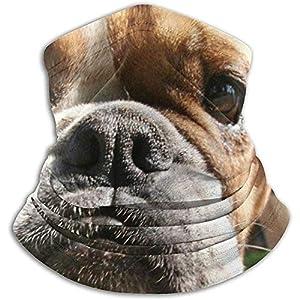 Merle House Cute Bulldog Tiere Wildlife Dog Parks Unisex Winter Nackenwärmer Gamaschen Haarband Kaltes Wetter Tube Gesichtsmaske Thermal Halstuch