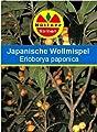 Japanische Wollmispel Eriobotrya japonica von Büttner Samen - Du und dein Garten