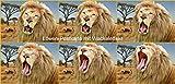 Lentikular carte animée avec image en hologramme nr.10196/rabat (lion): «retrouver lion g�HNT»
