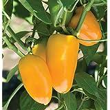 Snack Paprika - Mini Blockpaprika für Balkon und Terrasse - süß und mild - Mini Bell gelb - 20 Samen