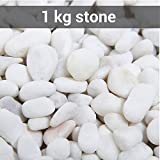 TiedRibbons® vase filler pebbles | stones for craft | pebbles stones for decoration | decorative stones for craft | stones in aquarium(1 KG,White)