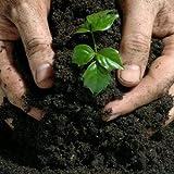 Creative Farmer Vermi-Compost (1 kg)