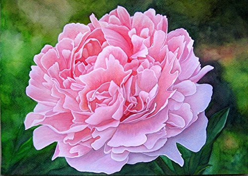 Pfingstrose / Peonie, ein handgemaltes und signiertes Original-Bild, Blumen-Bild