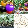 Keptei Samenhaus - 100 Stück Regenbogen Tomatensamen Bio Tomaten Samen fruit vegetable Heim Garten Dekor von Keptei bei Du und dein Garten