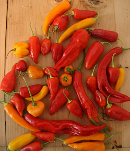 Historical Hungarian Chili Mix, Our Best Hots, 20 graines, NON GMO !