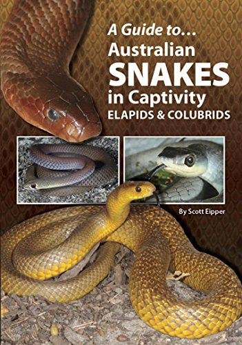 A Guide to Australian Snakes in Captivity—Colubrids and Elapids (English Edition)