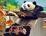 SINABC DIY 5D Diamond Painting Zubehör Süßes Panda Klettertier Runder Bohrer Kreuzstich Stickerei Mosaik Bilder Leinwand Einzigartige Kunst Geschenk Raumdekoration Frameless 40X50Cm