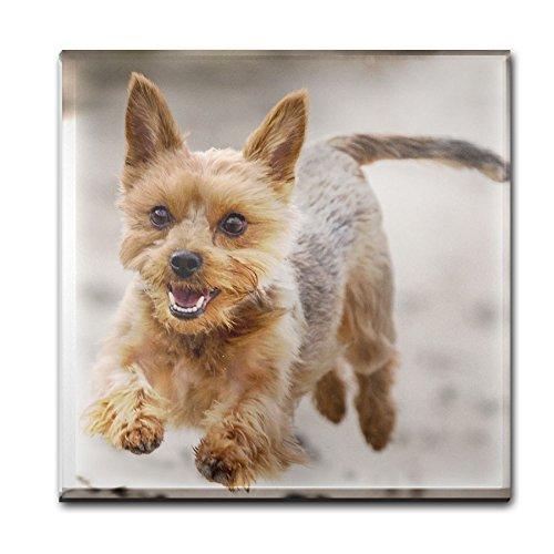 Yorkshire Terrier 100 sottobicchiere di (Yorkshire Terrier Coaster)