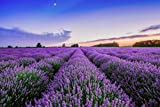 "Portal Cool App 100 Samen mit Tracking: Samen Lavendel Angustifolia Var ""Vera"" Non Gmo Aromatic Staude Garten"