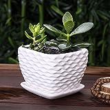 Weiß saftige Übertopf weiß Topfpflanzen square Pflanzmaschine weiße Wellpappe Keramik Topf Werk 11 × 11 × 9 cm