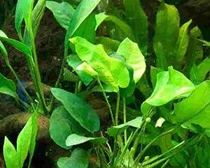 15 barschfeste Wasserpflanzen, Dünger, Aufbereiter
