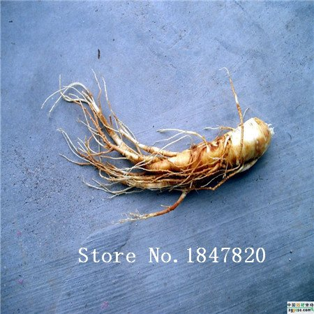 2016 Bonsai ginseng Graines 100pcs 10kinds mix Graines de fleurs Novel plantes pour jardin