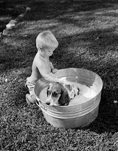Small boy washing dog in bowl in garden Poster Drucken (45,72 x 60,96 cm) -