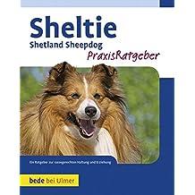 Sheltie: Shetland Sheepdog