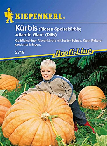 kurbis-atlantic-giant-dills