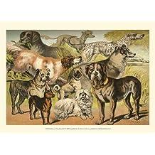 Henry J. Johnson – De Johnson Razas de perros II Artistica di Stampa (33,02 x 24,13 cm)