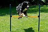 Dog Agility Starter-Set - 2