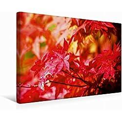 Calvendo Premium Textil-Leinwand 45 cm x 30 cm Quer Ahorn im Herbst | Wandbild, Bild auf Keilrahmen, Fertigbild auf Echter Leinwand, Leinwanddruck Natur Natur