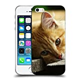 Just Phone Cases Schutz Hülle TPU Case Schutzhülle Silikon Tasche Dünn Transparent // V00004287 Katze liegend auf Holzbrettern // Apple iPhone 5 5S 5G SE