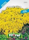 Sementi da fiore di qualità in bustina per uso amatoriale (ALISSO GIALLO)