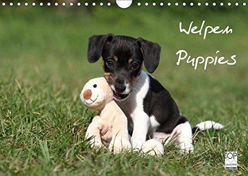 Welpen - Puppies (Wandkalender 2019 DIN A4 quer): Wandkalender (Monatskalender, 14 Seiten ) (CALVENDO Tiere)