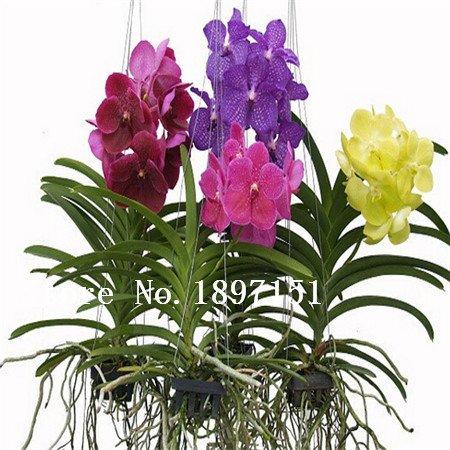Vente orchidées achat / vente de Vente pas cher