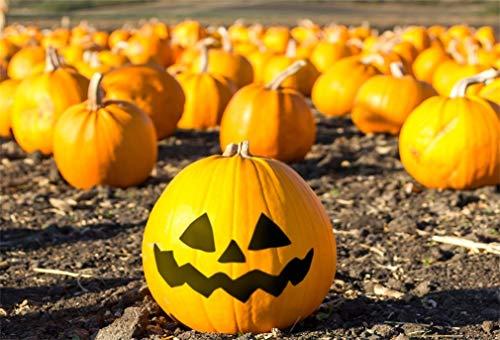 (YongFoto 2,2x1,5m Vinyl Foto Hintergrund Halloween Kürbis Patch in Kalifornien Fotografie Hintergrund für Fotoshooting Fotostudio Requisiten)