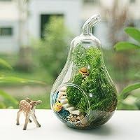 Bluelover Corpo a pera forma fiore vaso Moss Micro paesaggio Eco bottiglia di vetro - Forno Pera