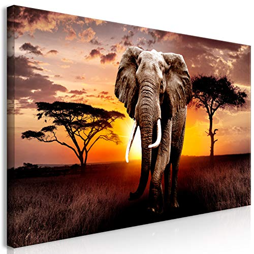 murando Mega XXXL Elefante Cuadro 170x85 cm - Cuadro Gigante único -...