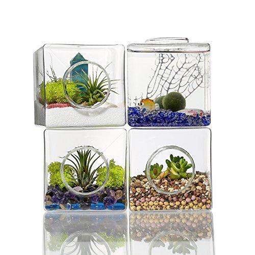 Mkouo 2 Stück Glas Würfel Pflanzen Terrarium Klein mit Deckel Tischplatte Sukkulente Moos Farn Blumentopf Deko, 8.9x8.9 cm Einzigartiger Behälter Mit Deckel