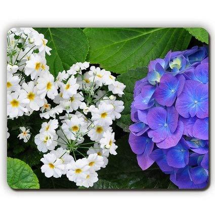 Kräuter-nagel ((Präzision gesäumt) Qualitäts-Mausunterlage, Primel-Hydrangeas verlässt Blumen-Kräuter Nahaufnahme, Spiel-Büro Mousepad)