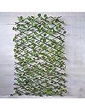 Hogar y Mas Jardin Vertical, celosia Extensible Hiedra