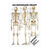Anatomisches Poster