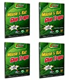 #2: Sahaya 4 pieces Mouse Trap Non-Toxic Glue Pad safe for Pets & children. Mouse & Rat Trap Insect Rodent Lizard Ant Cockroaches Rat Catcher Adhesive Sticky Glue Pad ( 4 Pcs)