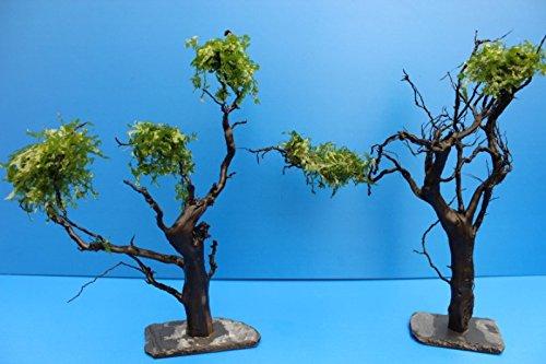 Moorkienwurzel XL 25-30cm bepflanzter Moorkien Garnelenbaum auf Schiefer Moorkienwurzeln Wurzel Moorkienholz