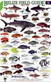 Reef Fish (Belize Field Guides)