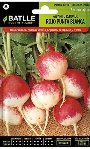 Batlle Gemüsesamen – Radieschen rund – Weisse Spitze (1800 Samen)