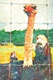 Notes: Curious Ostrich Behind A Fence On A Farm - Blank College-Ruled Lined Notebook