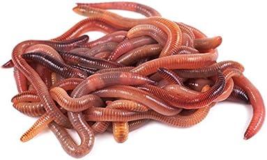 Kompostwürmer kaufen - 250 oder 500 Stück - Regenwürmer Wurmhumus
