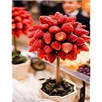 Lonlier Semillas de Fresas Ecologicas Bonsai Rojas 100 pcs Semillas de Frutas para Huerto, Jardin, Patio, Balcon