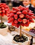 swiftt Obst Samen 100stk Erdbeeren Samen Bonsai Strawberry Seeds Bonsai Balkon Terrasse Gartenpflanze Samen, Schwarz/Blau/Grün/Lila/Rot/Weiß Erdbeere Pflanze