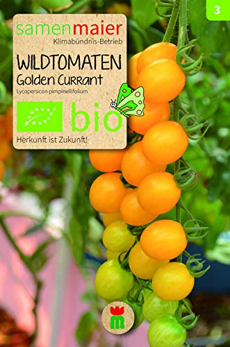 BIO Wildtomaten, Golden Currant (Lycopersicon pimpinellifolium)