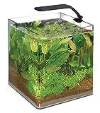 Wave Acquario Box Cubo 30 Orion