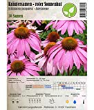 Semi di erbe - Echinacea rossa/ Echinacea purpurea 30 Semi