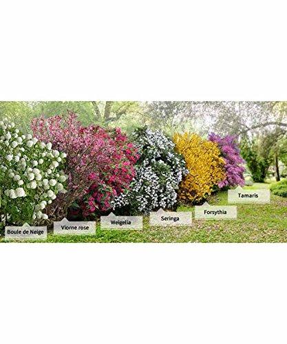 collection-la-haie-des-quatre-saisons-6-arbustes-extra-3-5-branches
