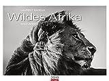 Wildes Afrika - Kalender 2019 - Weingarten-Verlag - Laurent Baheux - Wandkalender mit edlem Duoton-Druck - 78 cm x 58 cm