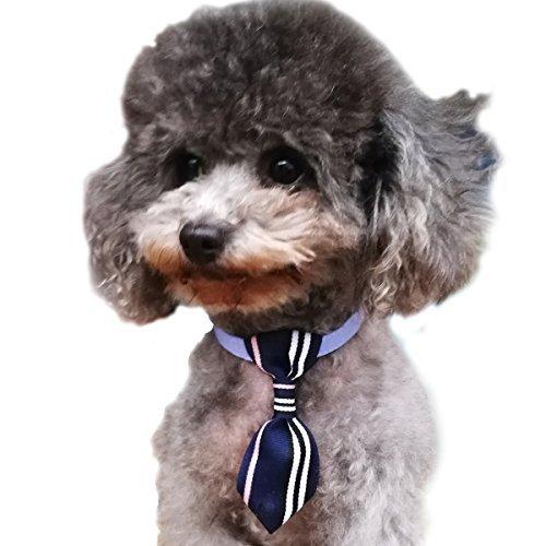 Charmsong Verstellbare Hundeleine Sonnenbrille Katzenhalsband Fashion Zubehör Puppy Kitten Handgefertigt Pfiffiges Geschenk, S, Blau