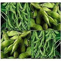 PlenTree (50) Las semillas japonesa Edamame ~ Soja alta en proteínas