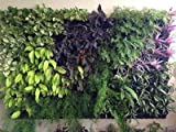 #3: Siva Homes & Naturals Vertical Garden Bio Wall Hanging Planter Black Color(8 Frame + 24 Pots) (Black)